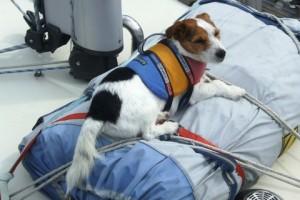 dog with life jacket