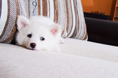 Perfect Apartment Dogs: Dogs that make the perfect ...