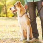 Using a dog-walking app can help keep you motivated to take daily walks.