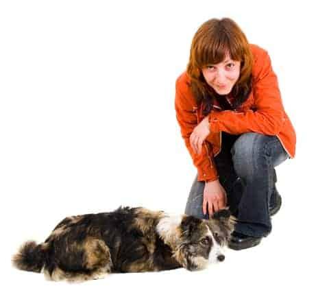 Train Your Dog Not To Jump Dog Health Dog Training Dog