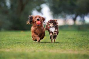 prevent canine depression