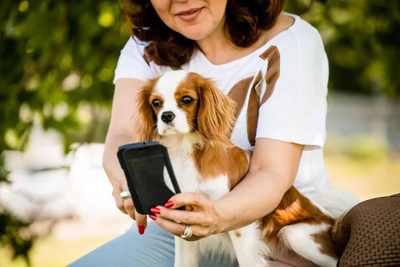 high tech dog gadgets go pro fetch smartbowl dogtelligent petbot