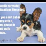 Dog inspiration: Walk away