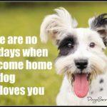 Dog inspiration: No bad days