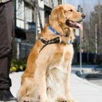 Take care of your service dog
