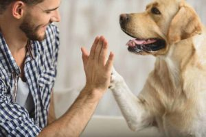 Adopting a dog saves two lives -- the dog's and yours.