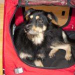 Soft dog crates create cozy dens