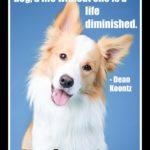 Dog inspiration: Once you've had a wonderful dog ...