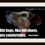 Dog inspiration: Old dogs are comfortable