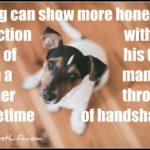 Dog inspiration: Honest affection