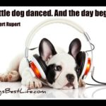 Dog inspiration: A little dog danced. And the day began.