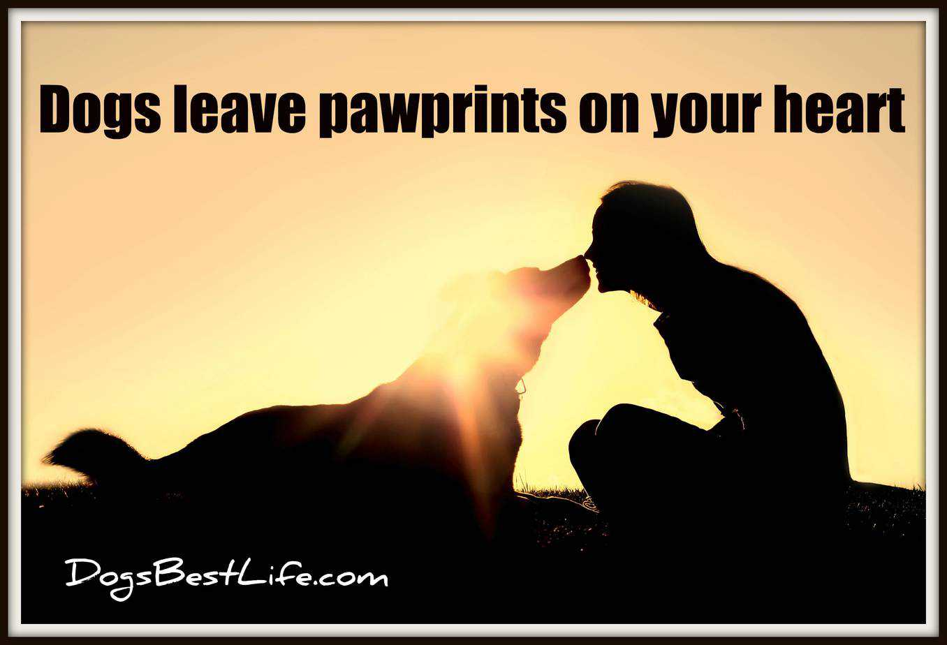 dogs leave pawprints on your heart