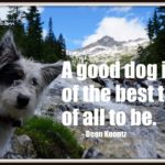Dog inspiration: A good dog is one of the best things of all to be