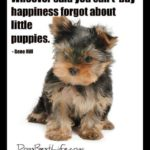 Dog inspirations: Whoever said you can't buy happiness forgot about little puppies
