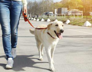 dog walking info
