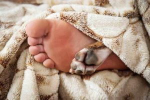 Science says sleep with your dog. Human foot and dog's paw stick out from under the covers.